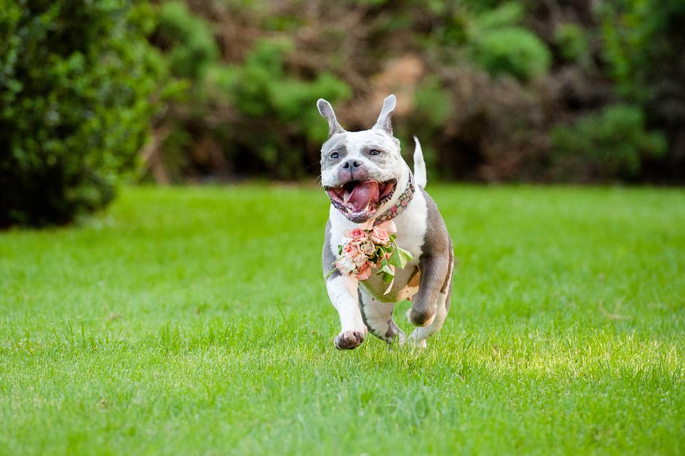 Leap Day Dog Photography Jenny Karlsson 019.jpg