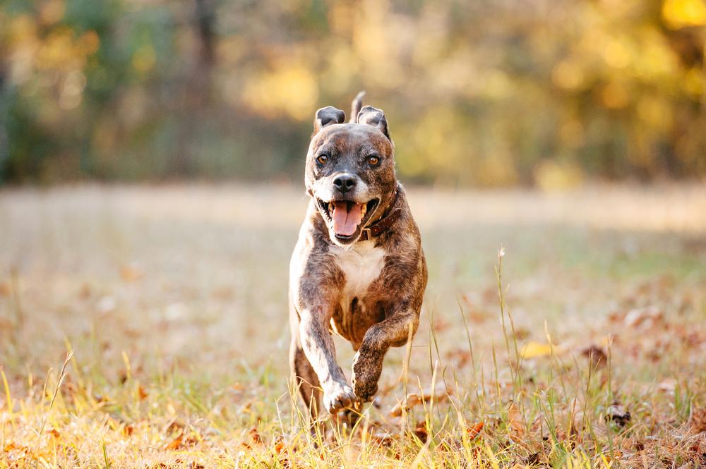 Leap Day Dog Photography Jenny Karlsson 021.jpg