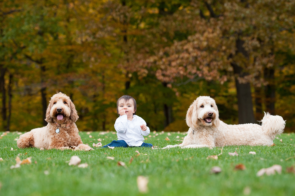 Pet and Family Photographer Erie Pennsylvania 023.jpg