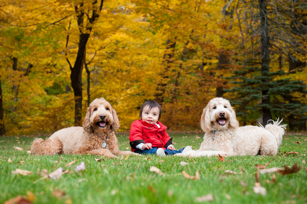 Pet and Family Photographer Erie Pennsylvania 049.jpg