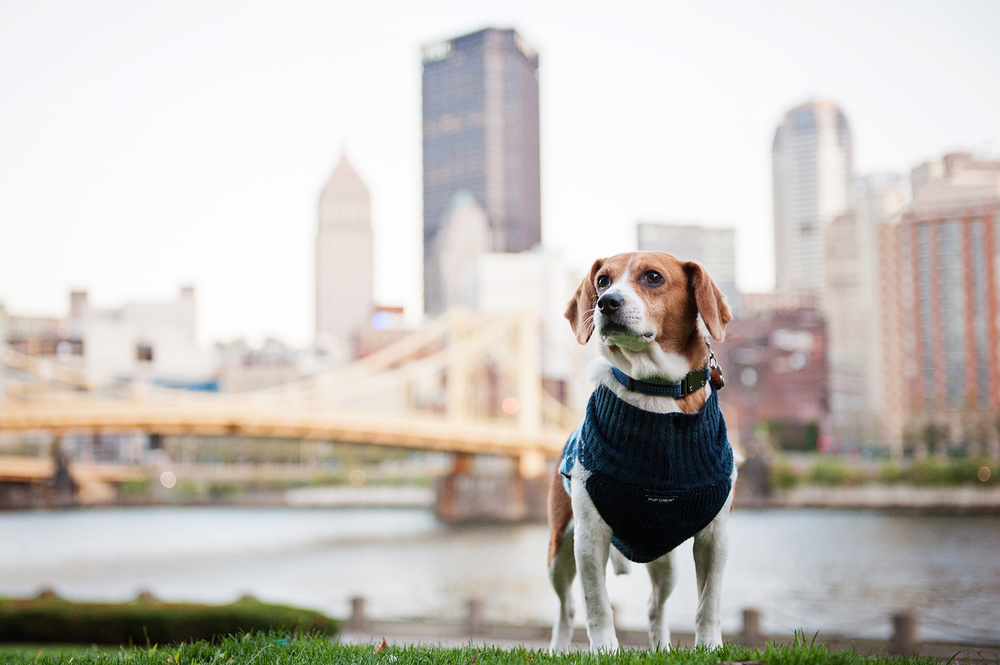 dexter jack-a-bee dog photography pittsburgh 027.jpg