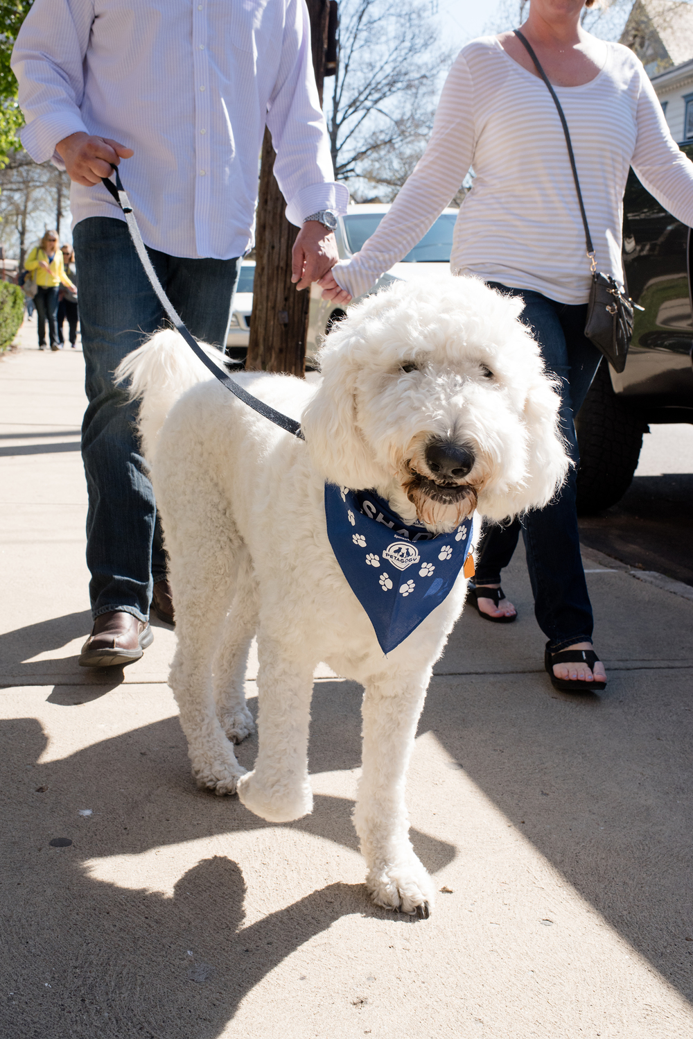 Bark Shadyside Pup Walk Pittsburgh 2016 106.jpg