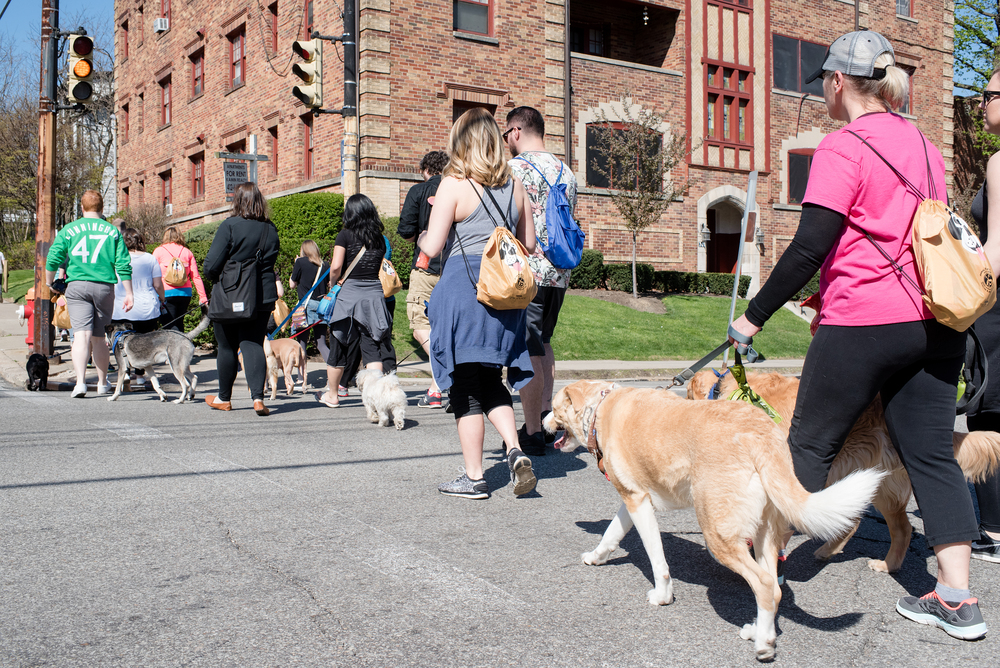 Bark Shadyside Pup Walk Pittsburgh 2016 109.jpg