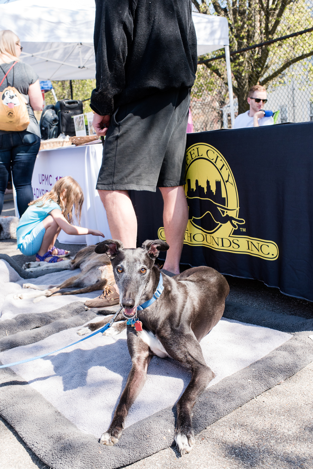 Bark Shadyside Pup Walk Pittsburgh 2016 166.jpg