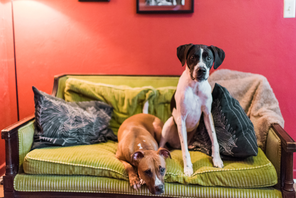 in-home-pet-photography-pittsburgh-struggles-francis-022.jpg