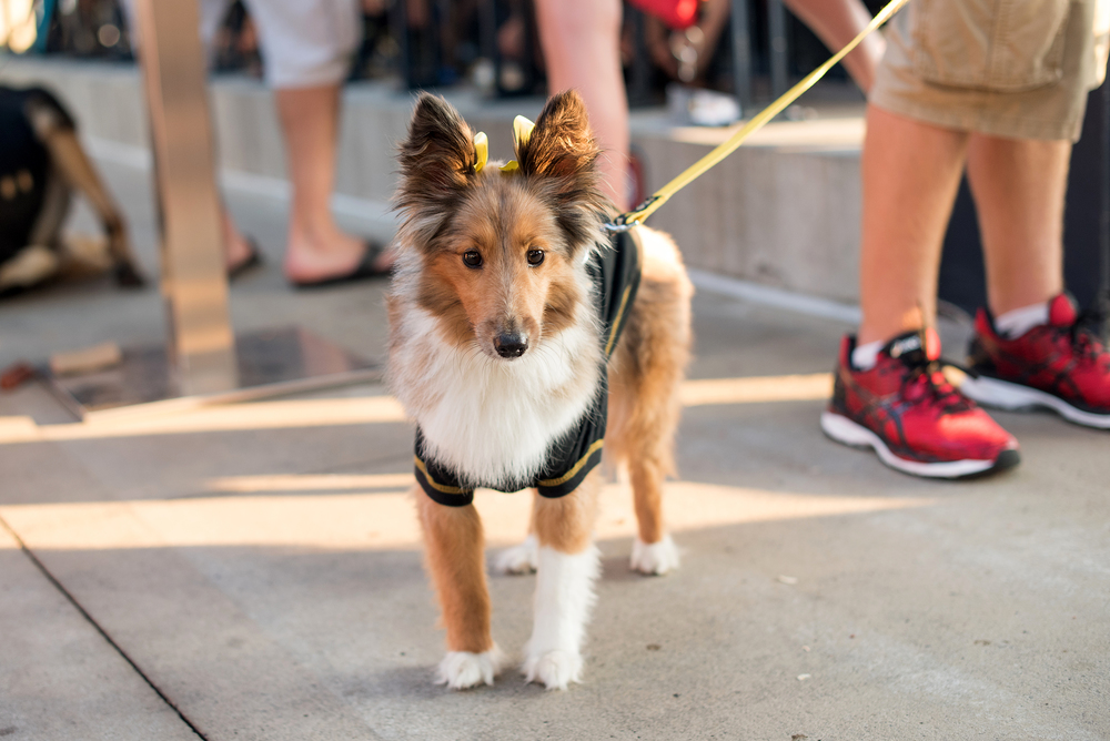Pup Night at PNC Park-32.jpg