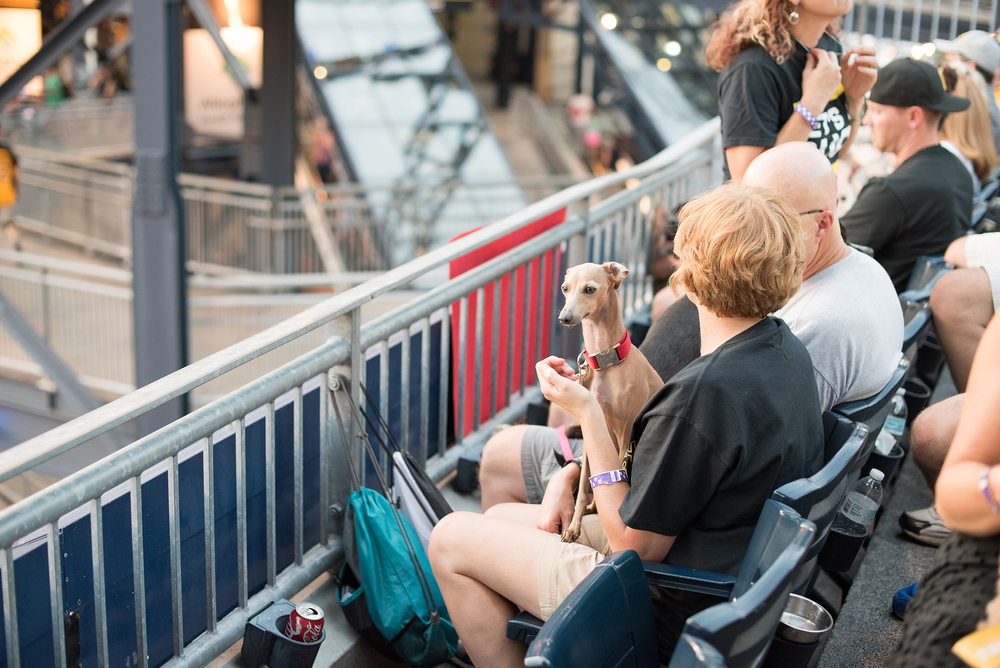 Pup Night at PNC Park-74.jpg