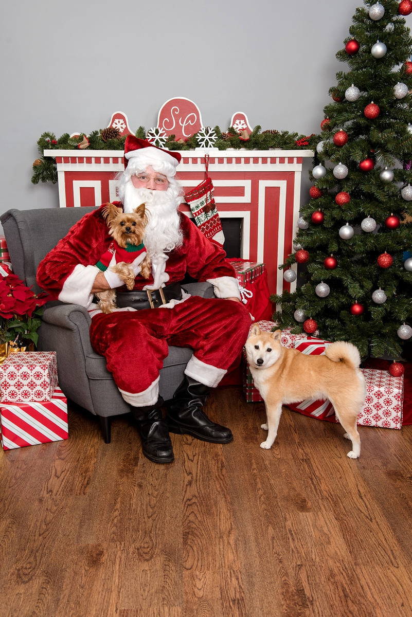 pet photos with Santa Petagogy Greensburg 001.jpg