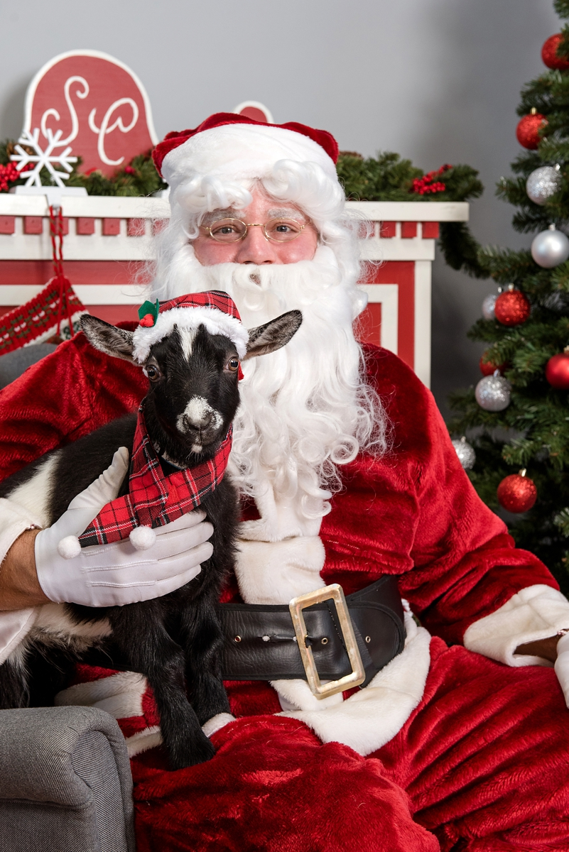 pet photos with Santa Petagogy Greensburg 008.jpg