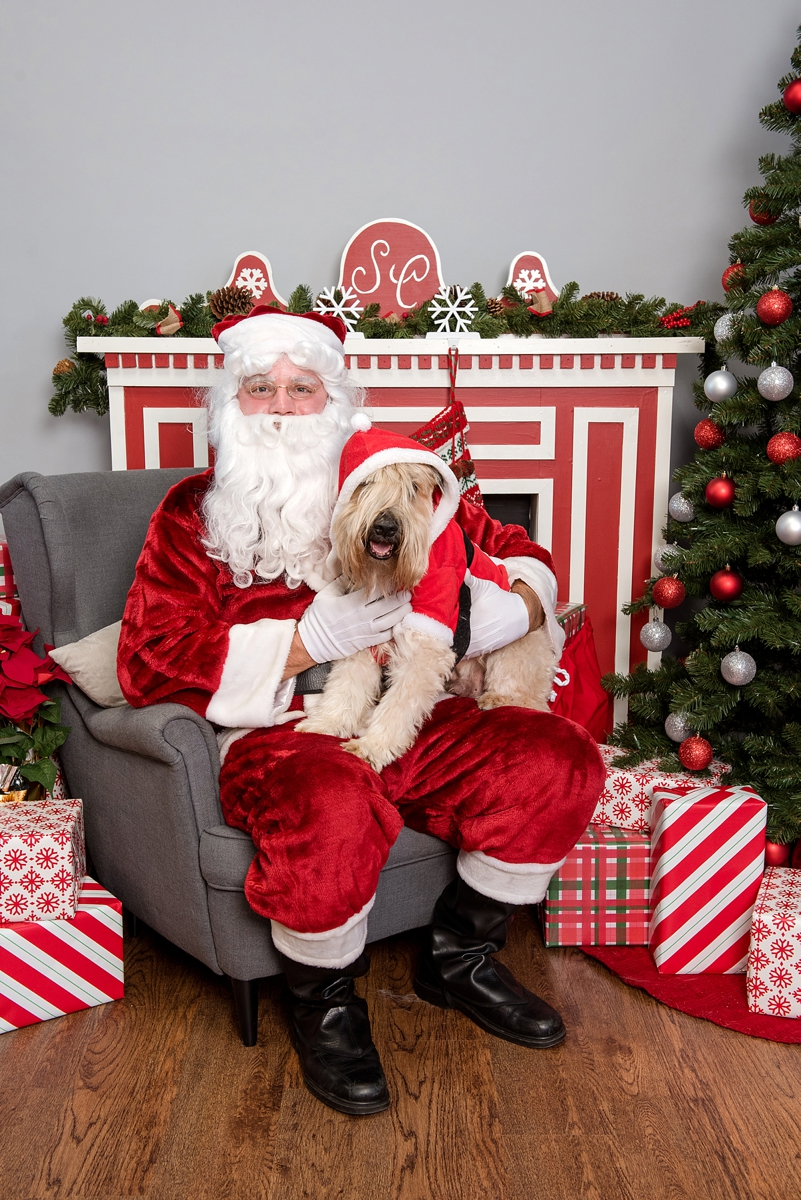 pet photos with Santa Petagogy Greensburg 009.jpg