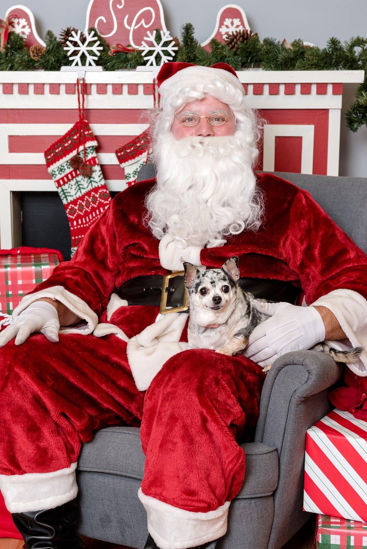 pet photos with Santa Jenny Karlsson Photography 003.jpg