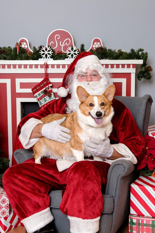 pet photos with Santa Jenny Karlsson Photography 009.jpg