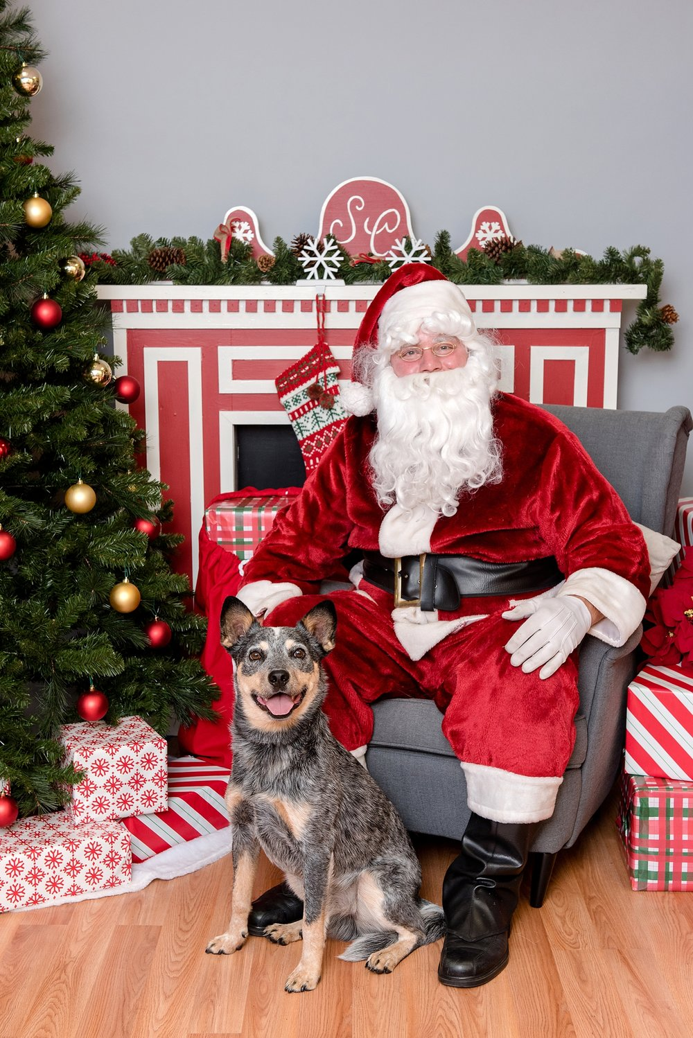 pet photos with Santa Jenny Karlsson Photography 007.jpg