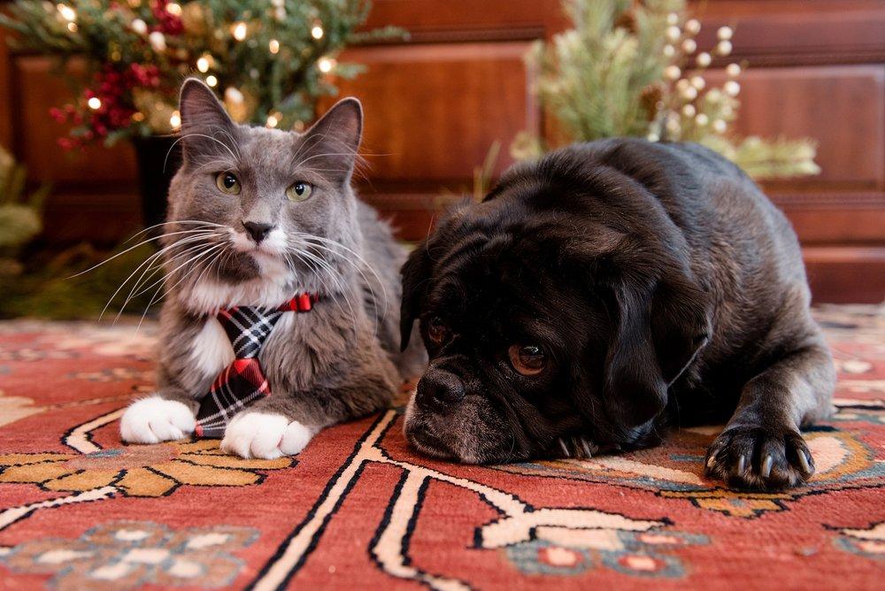 Rufus & Armani 018.jpg