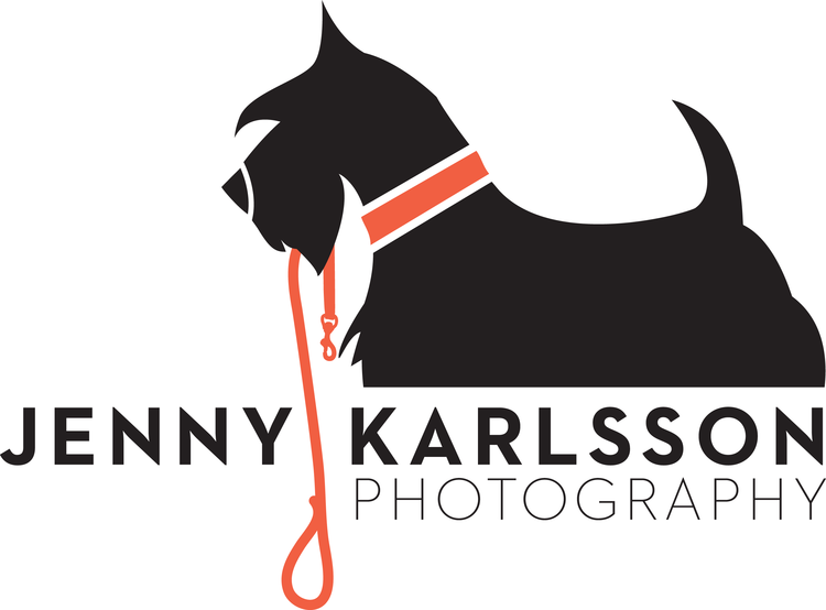 Pittsburgh Pet Photographer - Jenny Karlsson