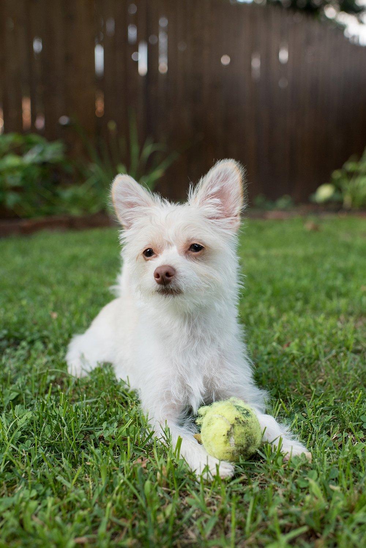 Jenny Karlsson Pet Photography Pittsburgh 949.jpg