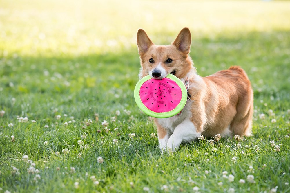 Jenny Karlsson Pet Photography Pittsburgh 045.jpg