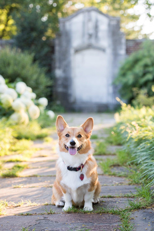 Jenny Karlsson Pet Photography Pittsburgh 062.jpg