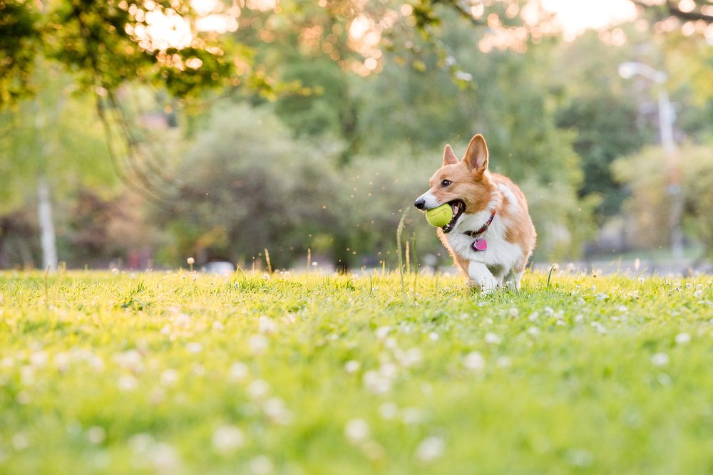 Jenny Karlsson Pet Photography Pittsburgh 073.jpg