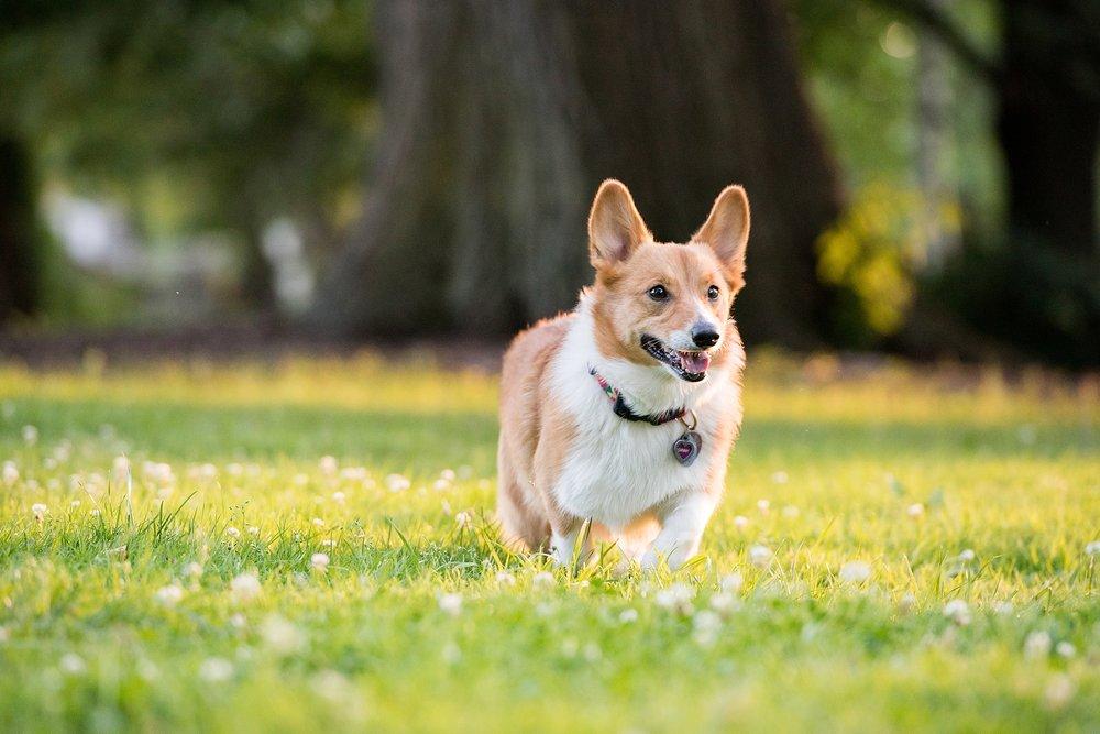 Jenny Karlsson Pet Photography Pittsburgh 074.jpg