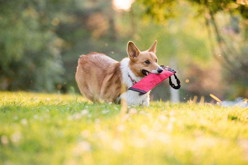 Jenny Karlsson Pet Photography Pittsburgh 075.jpg