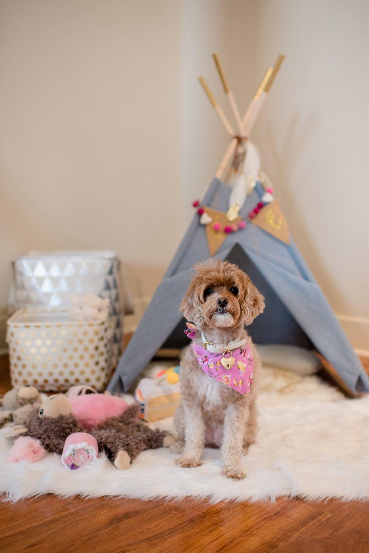 Jenny Karlsson Pet Photography Pittsburgh 160.jpg