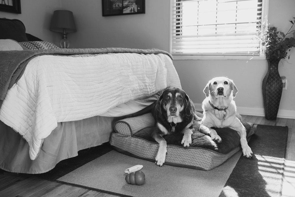 Jenny Karlsson Pet Photography Pittsburgh 013.jpg