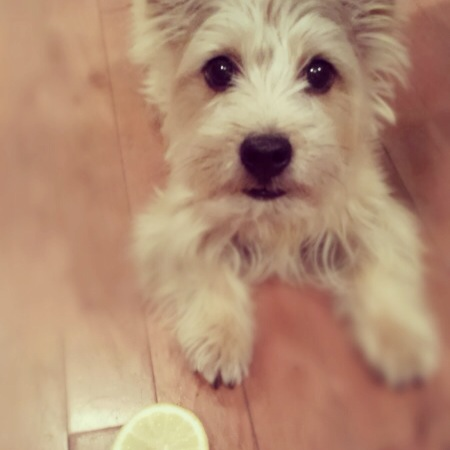Holly Loves Lemon, Too!