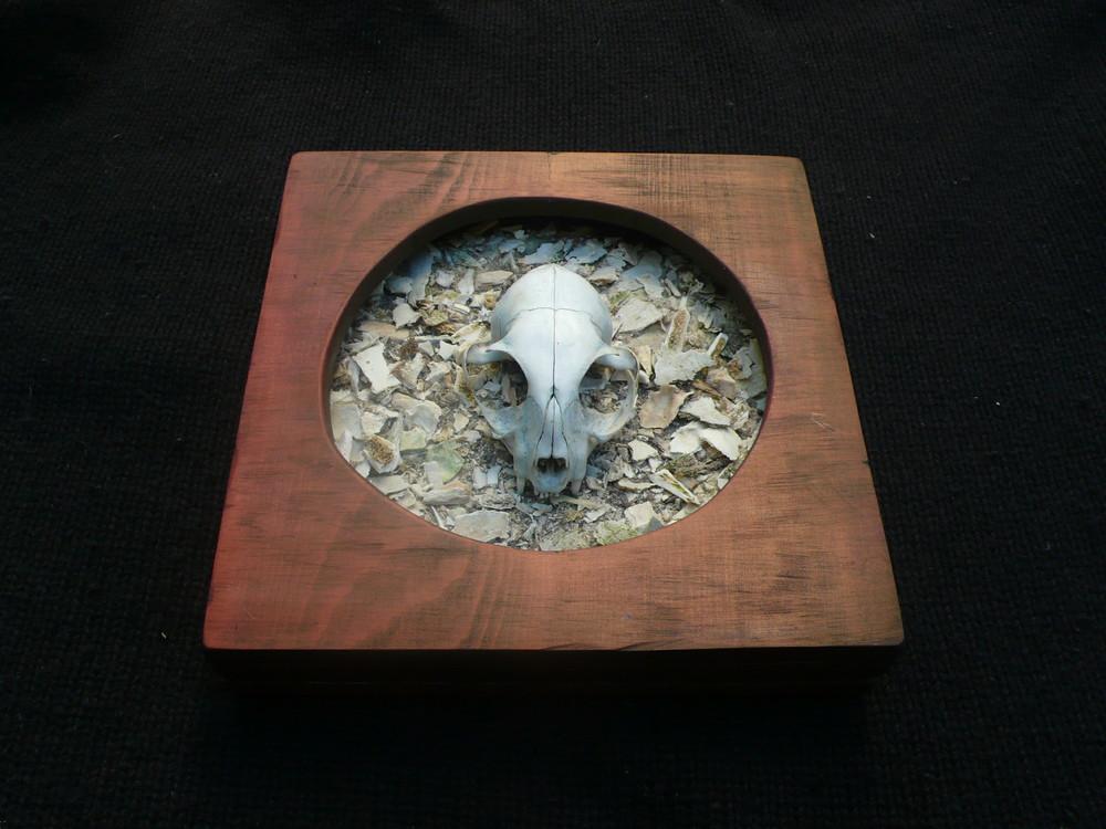Cat Skull 2.jpg