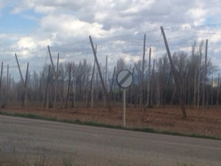 A big field used for hop plants. Lots of beer in Spain.
