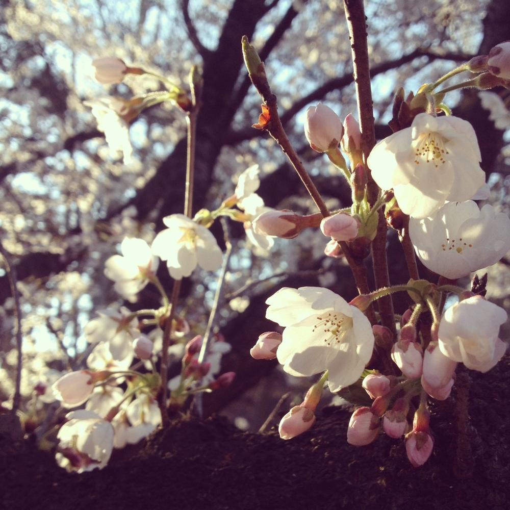 photo 2 (1).JPG