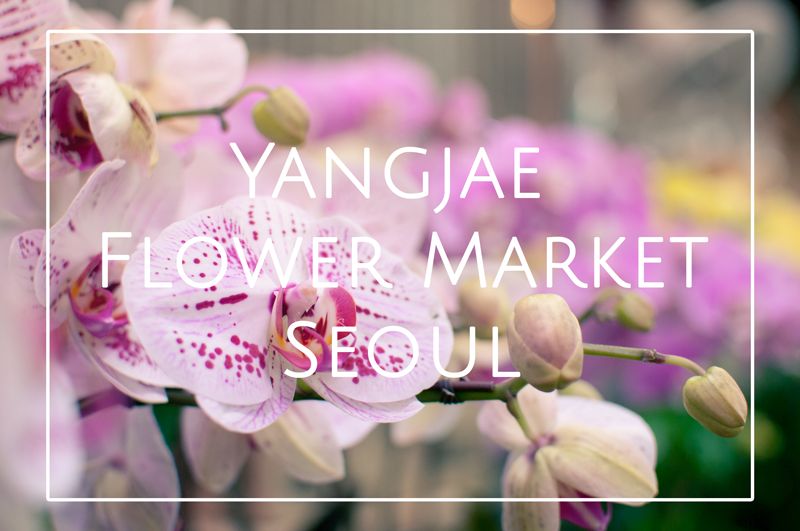 YangjaeFlowerMarketSeoulSouthKorea