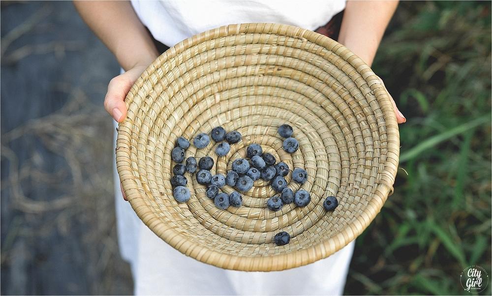 BlueberryFarmSouthKoreaHelen_0011.jpg