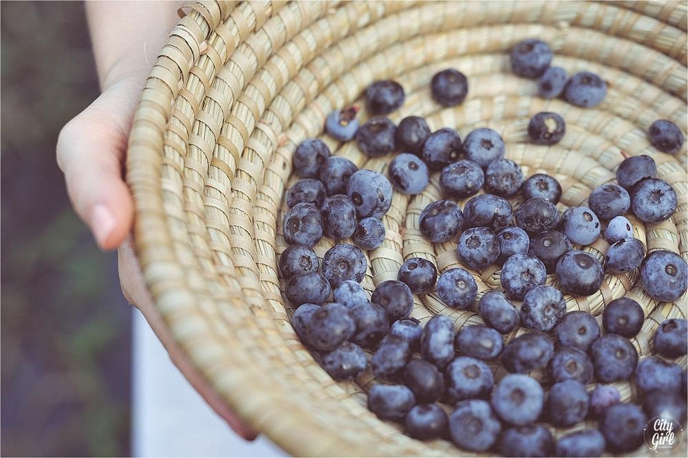 BlueberryFarmSouthKoreaHelen_0016.jpg