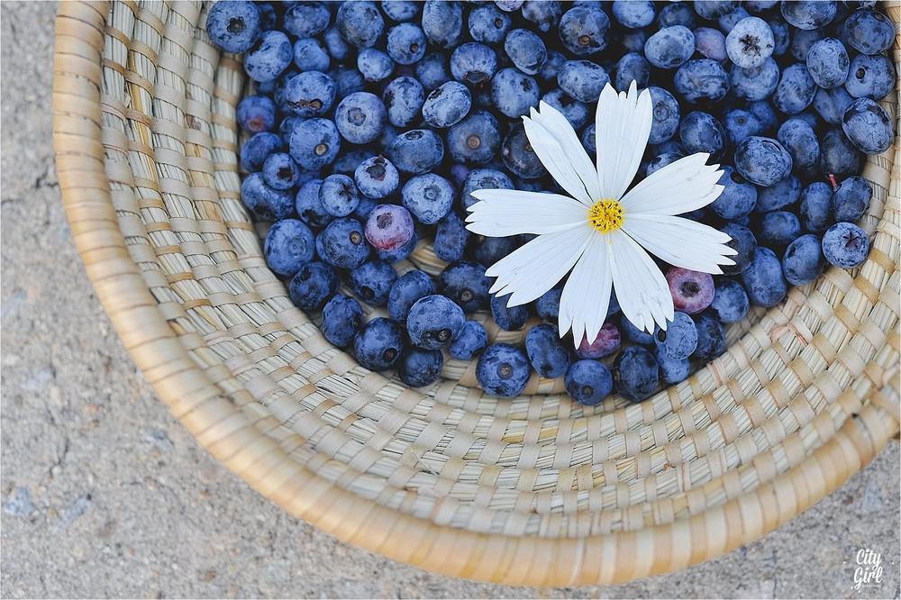 BlueberryFarmSouthKoreaHelen_0030.jpg