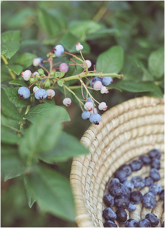 BlueberryPickingStyledShootCityGirlSearchingSouthKorea_0022.jpg