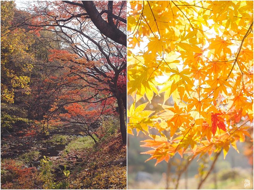 AutumnInKorea_0003.jpg