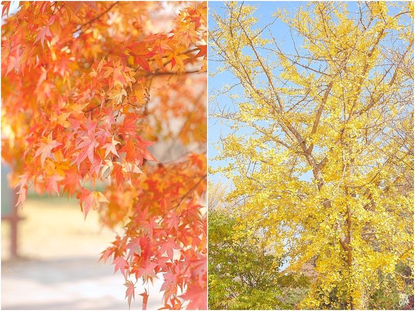 AutumnInKorea_0004.jpg