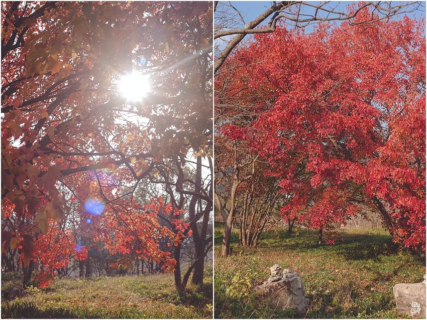 AutumnInKorea_0006.jpg