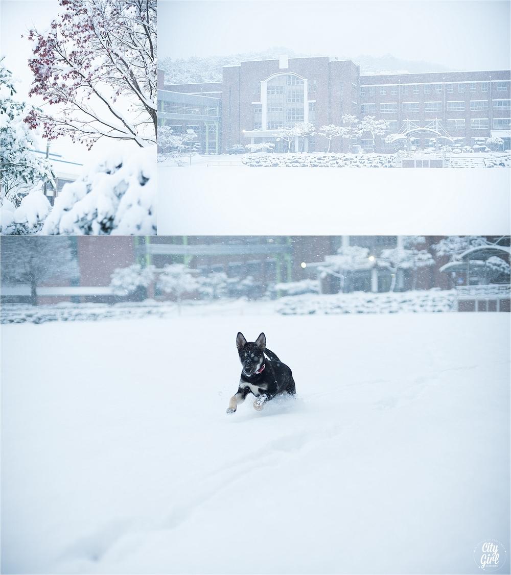 SnowInKorea_0013.jpg