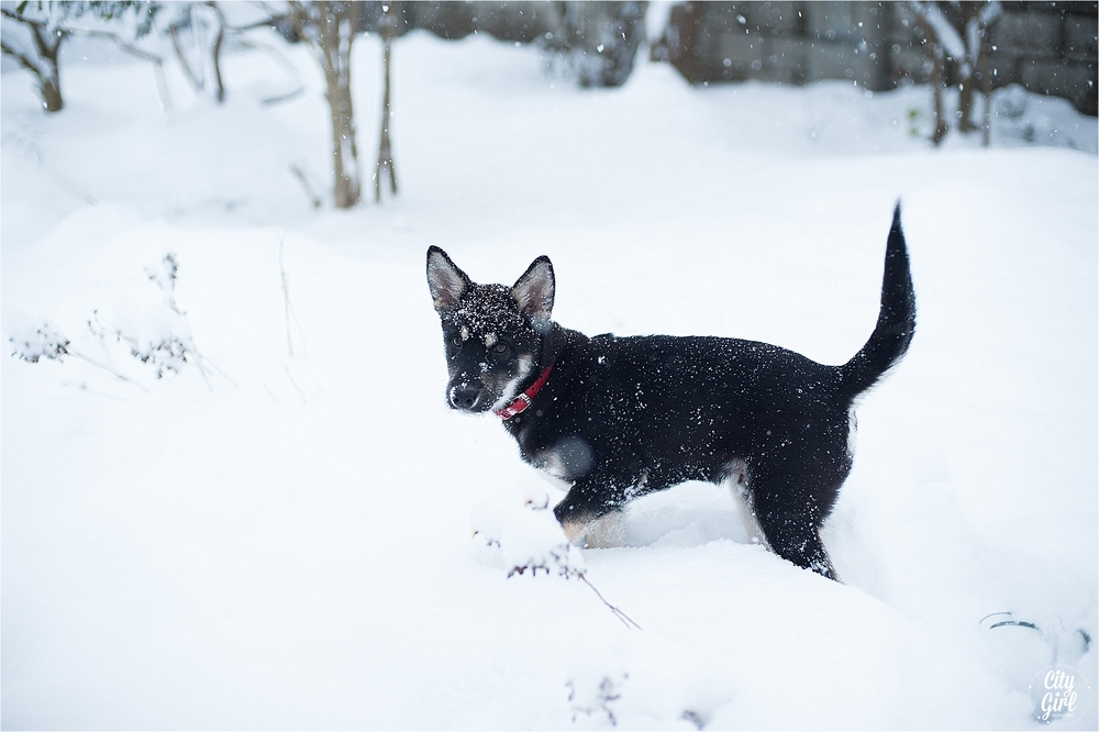 SnowInKorea_0016.jpg