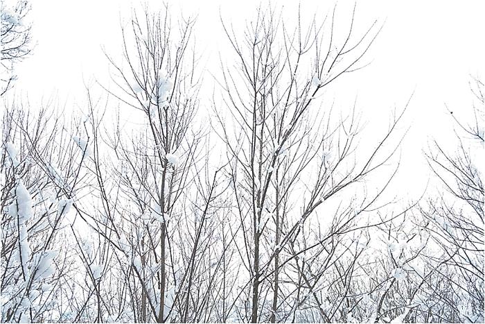 SnowInKorea_0008.jpg