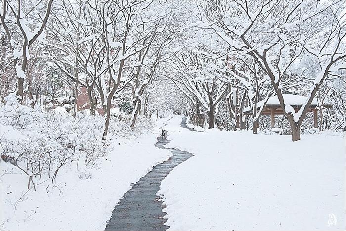 SnowInKorea_0009.jpg