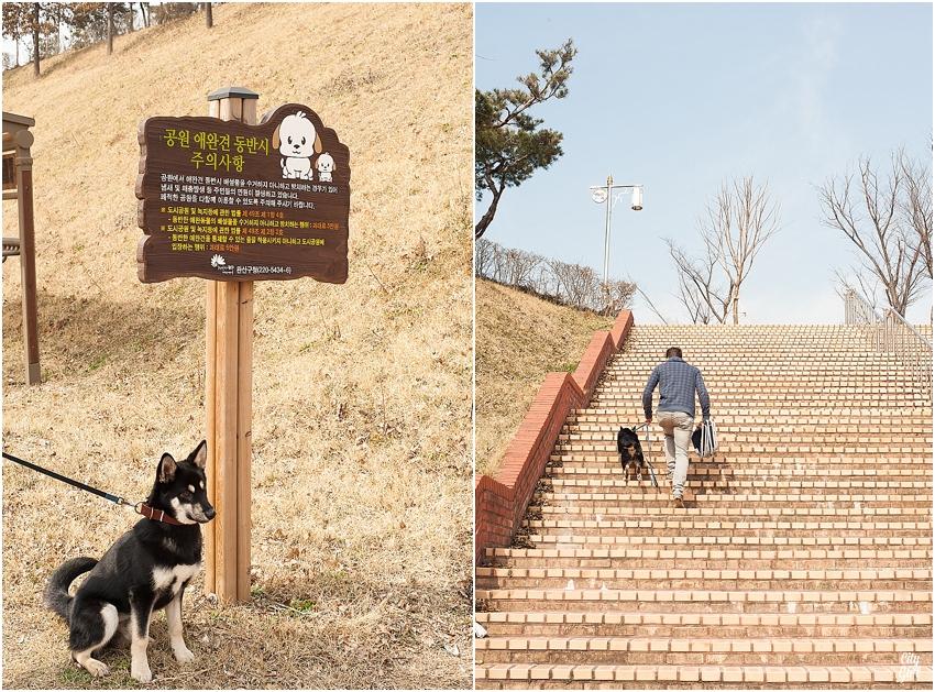 DogParkJeonjuSouthKorea