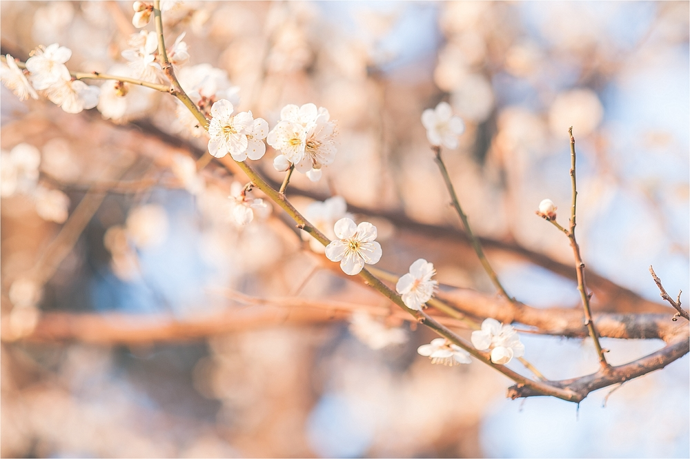 SpringBlossomsInSouthKorea_0027.jpg
