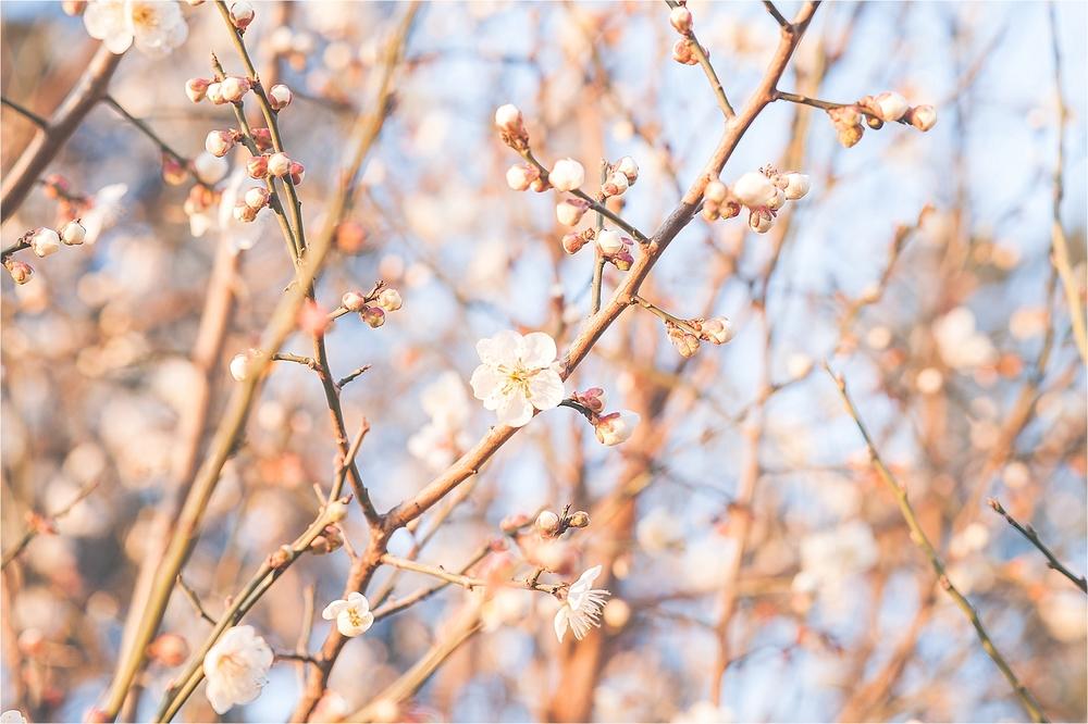 SpringBlossomsInSouthKorea_0019.jpg