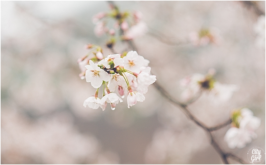 CherryBlossomsinSouthKorea_0067.jpg