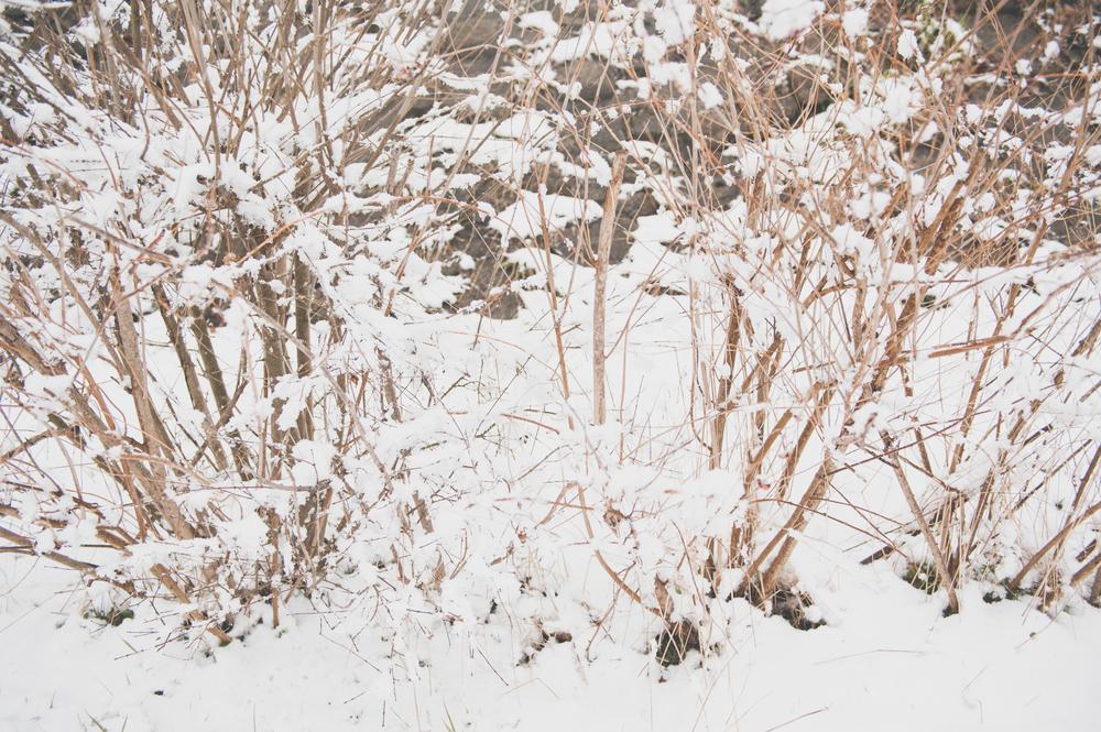 SnowTropicalStyledShootSouthKorea (48 of 89).jpg
