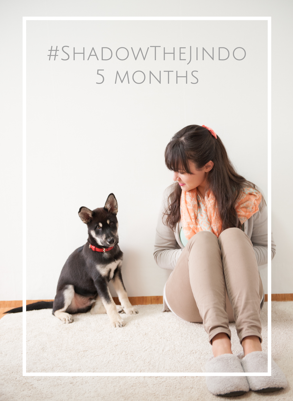 ShadowTheJindo5Months.png