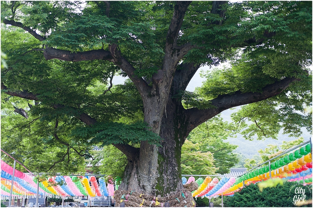 NaesosaKoreanTempleStay_0034.jpg